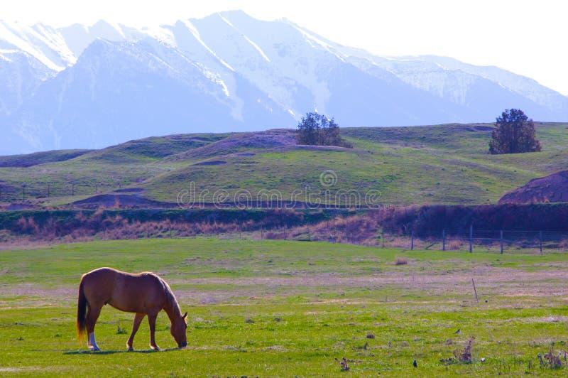 Montagne Montana di missione del palomino immagini stock