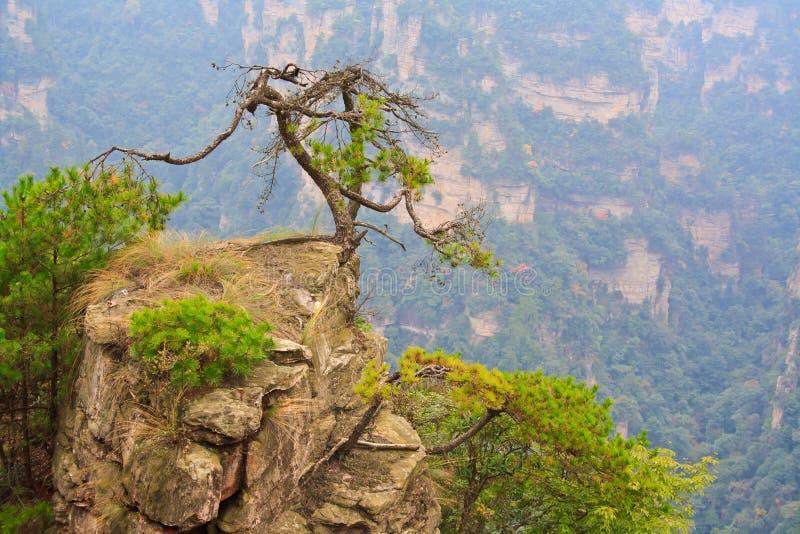 Montagne mystérieuse Zhangjiajie. images libres de droits