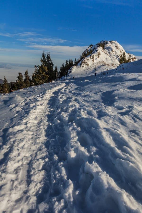 Montagne nell'inverno, Romania di Postavaru immagine stock libera da diritti