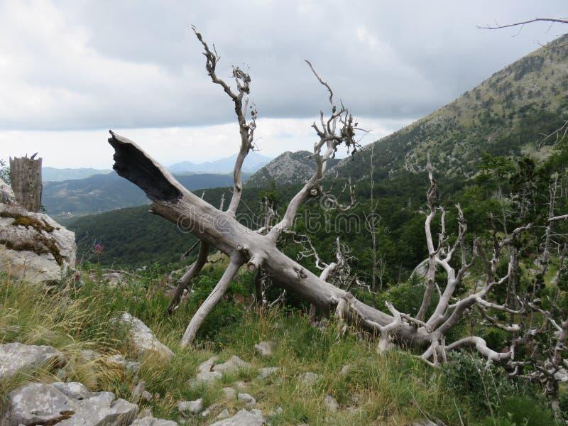 Montagne Orjen Monténégro Tronc d'arbre séché de paysage rocheux frappé par la foudre photographie stock libre de droits