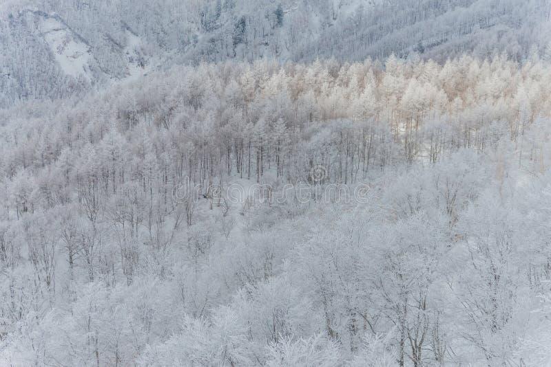Montagne paesaggio, Giappone di Snowy fotografia stock libera da diritti