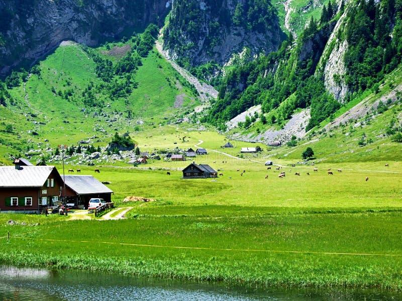 montagne, paysage, alpes, nature, maison, montagnes, vallée, herbe, vert, ciel, village, Autriche, alpine, forêt, rurale image libre de droits