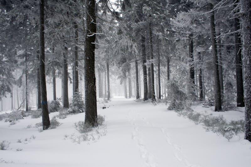 Montagne polacche durante l'inverno fotografie stock