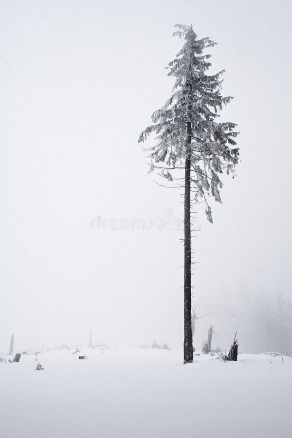 Montagne polacche durante l'inverno immagini stock