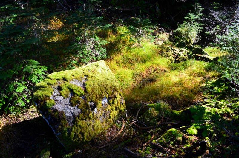 Montagne Vancouver de grouse image libre de droits
