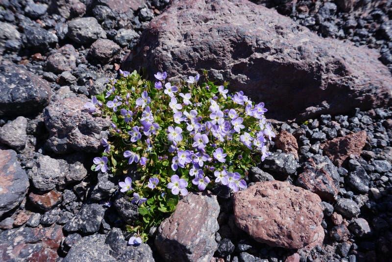 Montagne violette image libre de droits