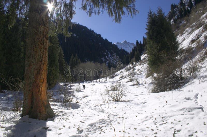 Montagnes à l'hiver photos libres de droits