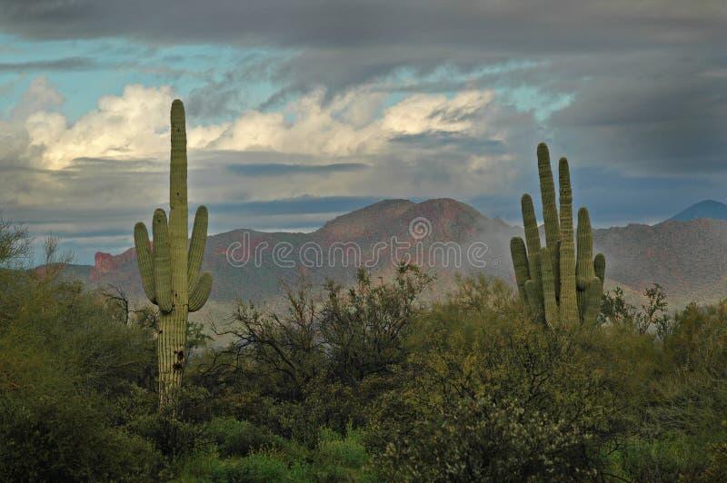 Montagnes 2 de cactus et de superstition de Saguaro photo libre de droits
