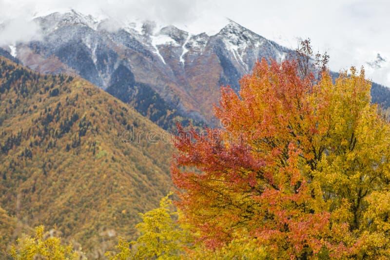 Montagnes avec des couleurs d'automne photo stock