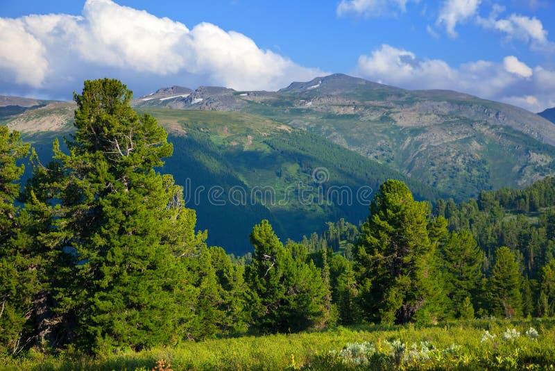 Montagnes avec la forêt de cèdre images stock