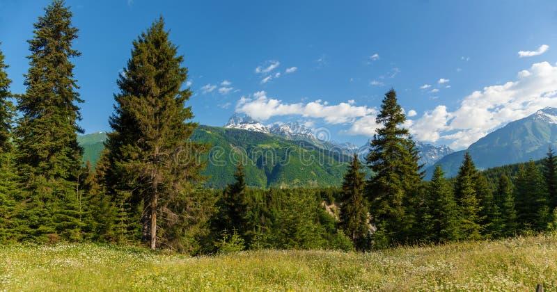 Montagnes avec le paysage vert de forêt photos libres de droits