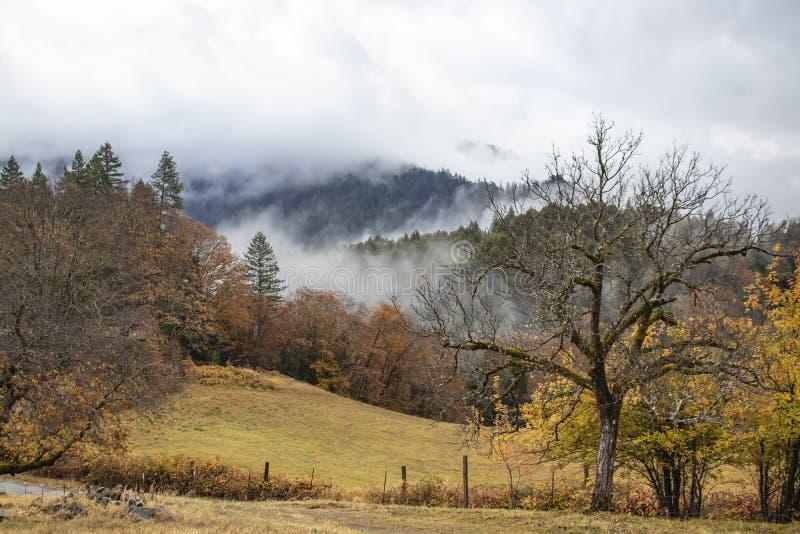 Montagnes brumeuses - champ et barrière avec des arbres et brouillard ouverts sur les mountians à l'arrière-plan en automne photo libre de droits