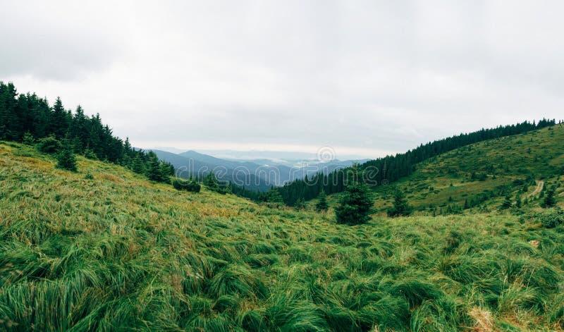 Montagnes carpathiennes images libres de droits