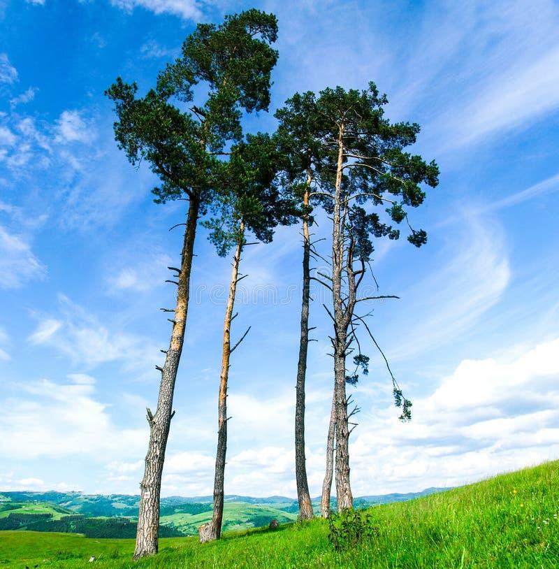 Montagnes carpathiennes en Ukraine photos libres de droits
