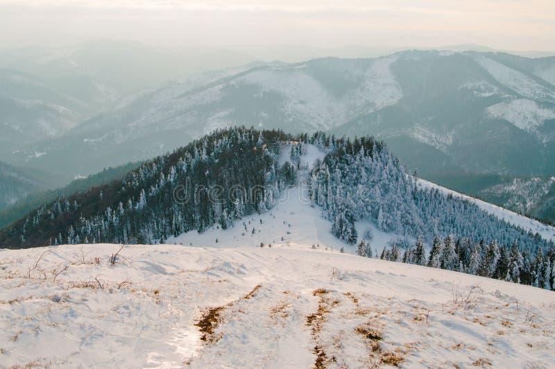 Montagnes carpathiennes ukrainiennes près de Skole Horizontal de l'hiver photo stock