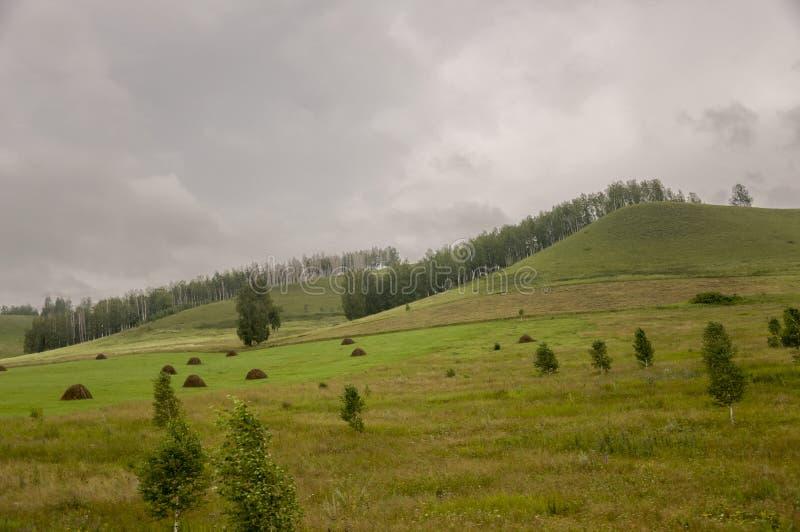 Montagnes Champ vert avec des teintes de jaune avec des meules de foin et des arbres loin ?t?, ao?t photo libre de droits