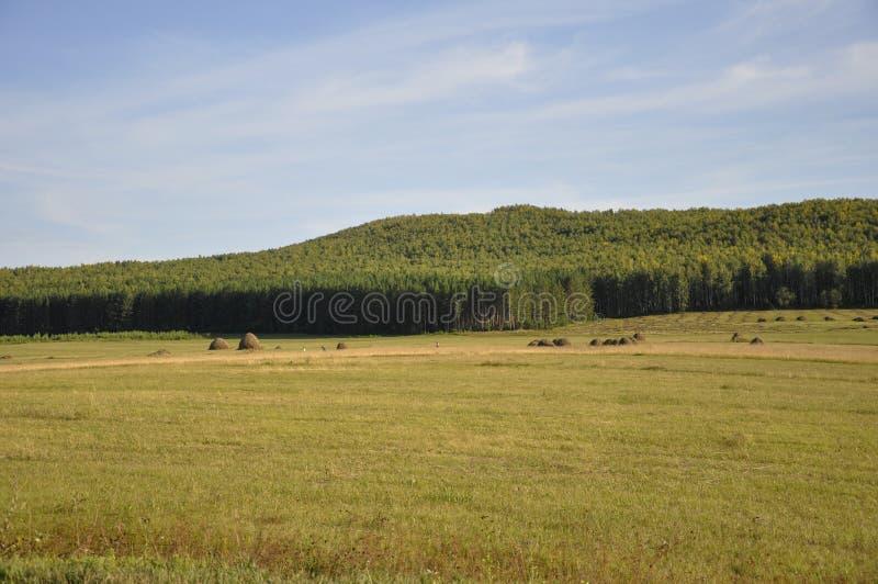 Montagnes Champ vert avec des teintes de jaune avec des meules de foin et des arbres loin ?t?, ao?t images libres de droits
