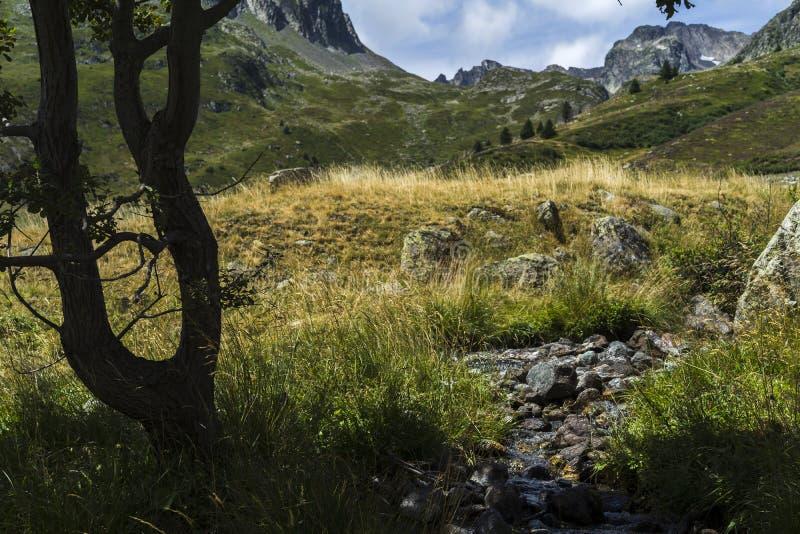 Montagnes, champs et torrents photos libres de droits