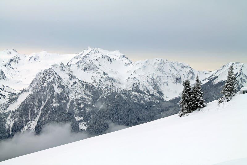Montagnes couronnées de neige au delà d'un champ de Milou photos libres de droits