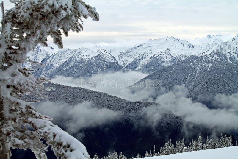 Montagnes couronnées de neige encadrées par un arbre de Milou photographie stock