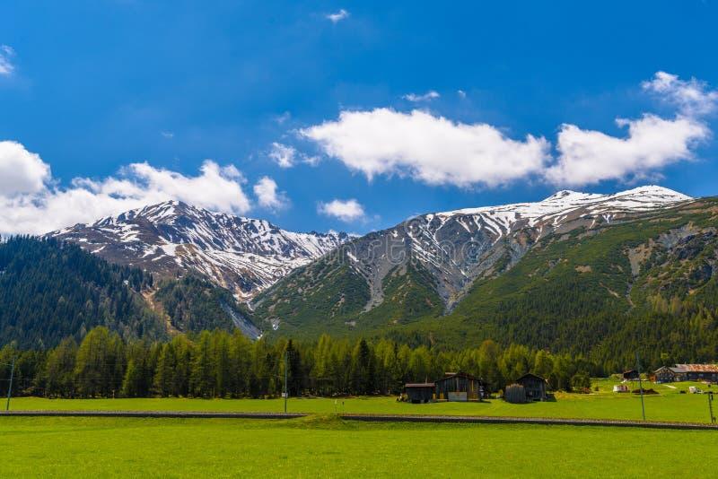 Montagnes d'Alpes couvertes de forêt de pin, Davos, Graubuenden, commutateur images stock