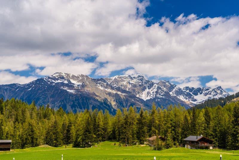 Montagnes d'Alpes couvertes de forêt de pin, Davos, Graubuenden, commutateur image stock