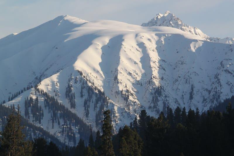 Montagnes d'arbre photos libres de droits
