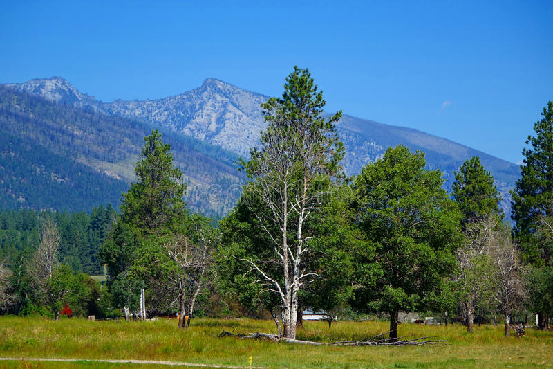 Montagnes de Bitterroot - Montana photographie stock