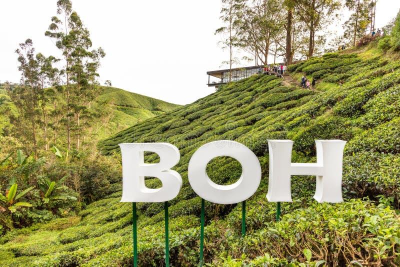 MONTAGNES DE CAMERON, MALAISIE, LE 6 AVRIL 2019 : Le centre de thé de BOH Sungai Palas offre la vue scénique avec le café et le m images libres de droits