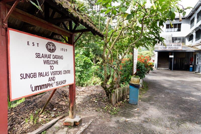 MONTAGNES DE CAMERON, MALAISIE, LE 6 AVRIL 2019 : Le centre de thé de BOH Sungai Palas offre la vue scénique avec le café et le m image libre de droits
