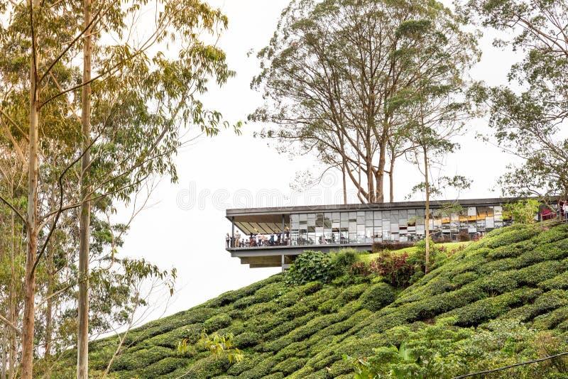 MONTAGNES DE CAMERON, MALAISIE, LE 6 AVRIL 2019 : Le centre de thé de BOH Sungai Palas offre la vue scénique avec le café et le m photographie stock libre de droits