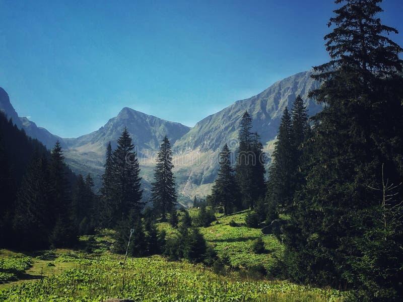 Montagnes de Fagaras image stock