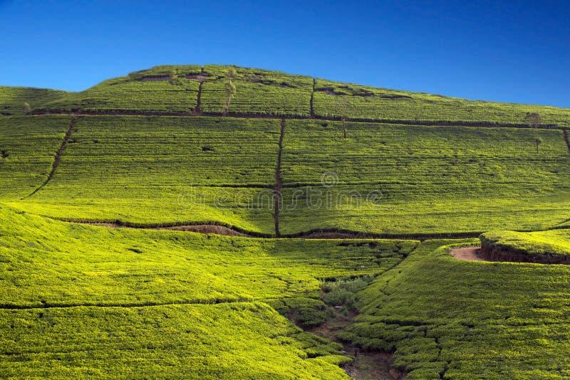 Montagnes de jardin de thé de Sri Lanka images stock