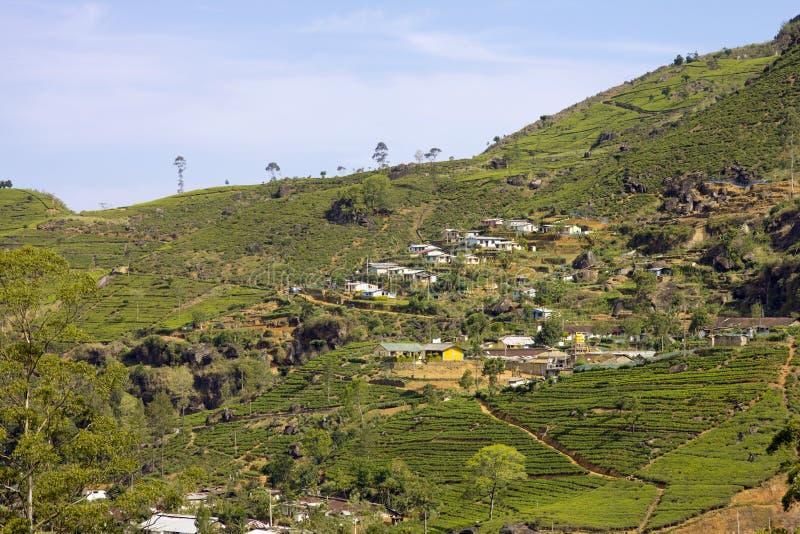 Montagnes de jardin de thé du Sri Lanka image stock