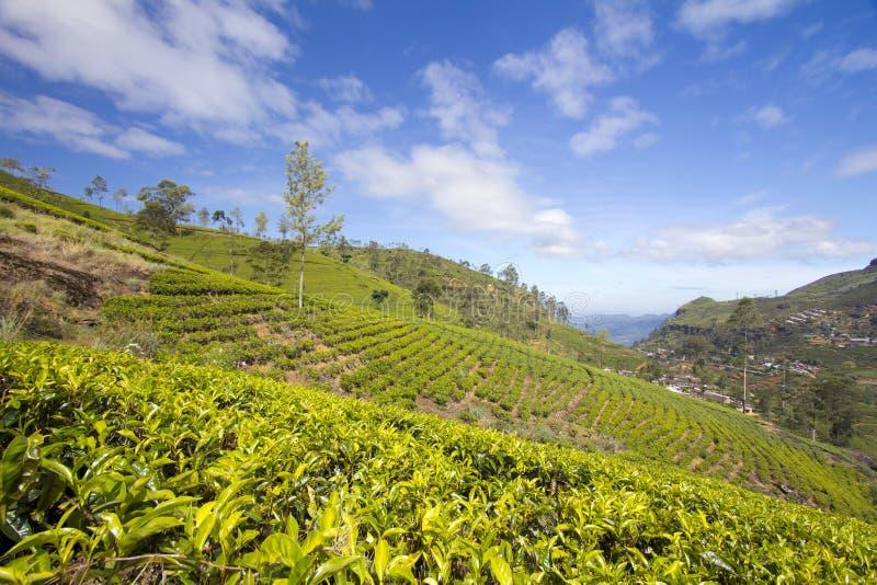 Montagnes de jardin de thé du Sri Lanka images stock
