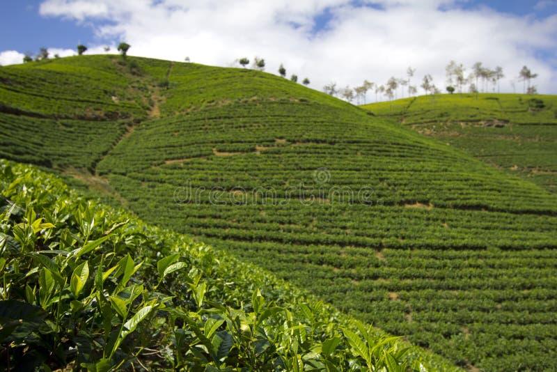 Montagnes de jardin de thé du Sri Lanka photographie stock
