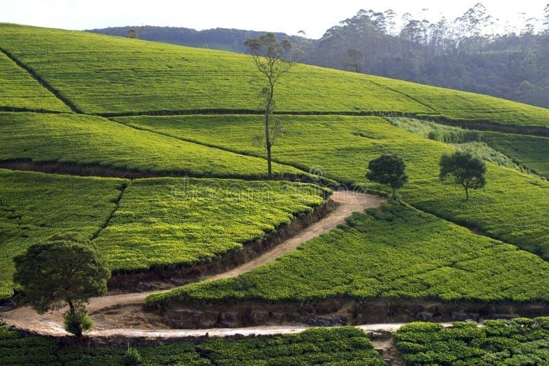 Montagnes de jardin de thé du Sri Lanka photos stock