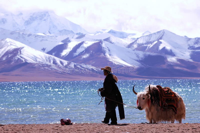 Montagnes de la neige du Thibet photos libres de droits