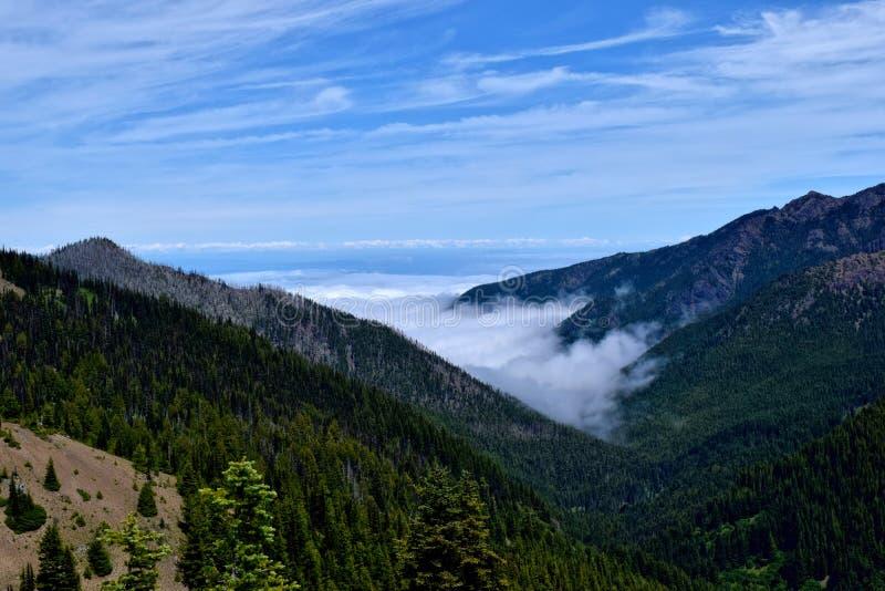 Montagnes de Ridge d'ouragan, parc national olympique photographie stock libre de droits