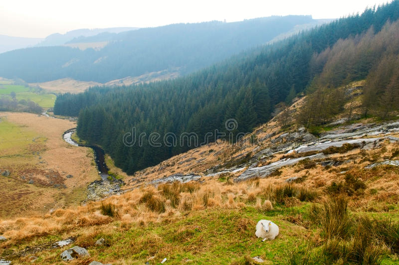 Montagnes de Wicklow, Irlande photos libres de droits
