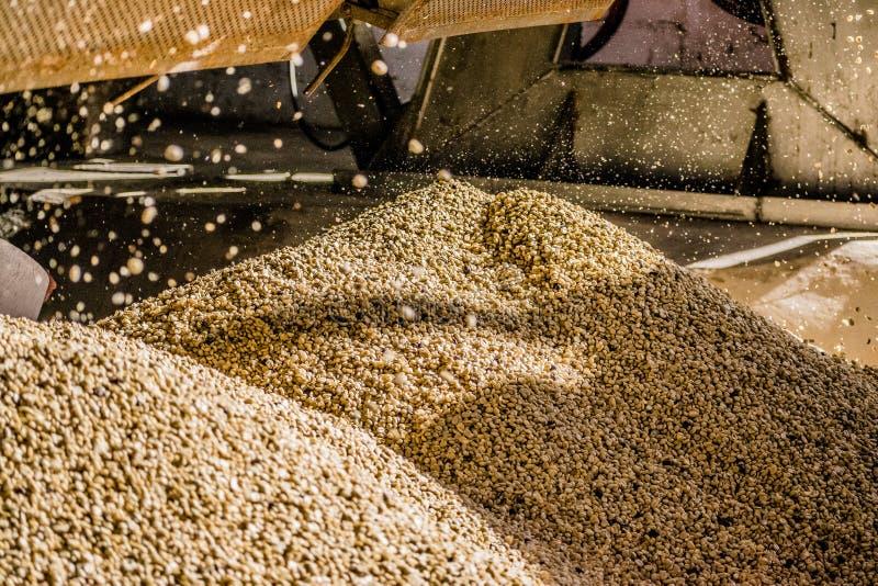 montagnes des grains de café image stock