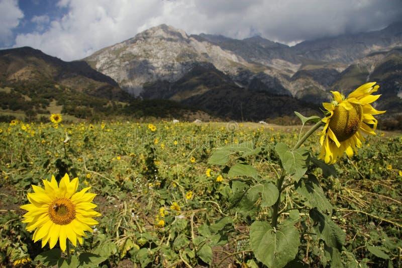 Montagnes en le Kyrgyzstan image libre de droits