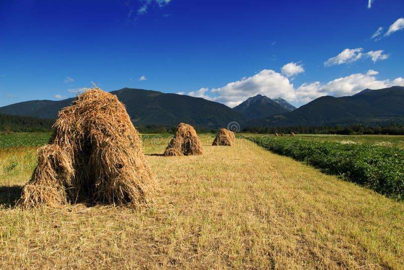 Montagnes en Slovaquie images stock