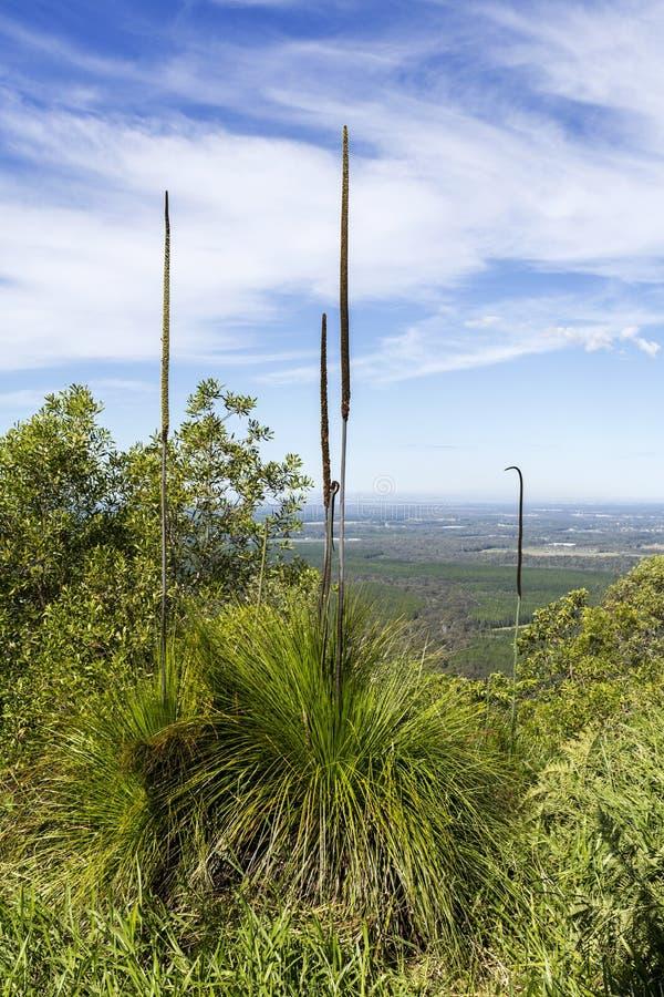 Montagnes en verre de Chambre – bâti Beerburrum Grasstree image libre de droits