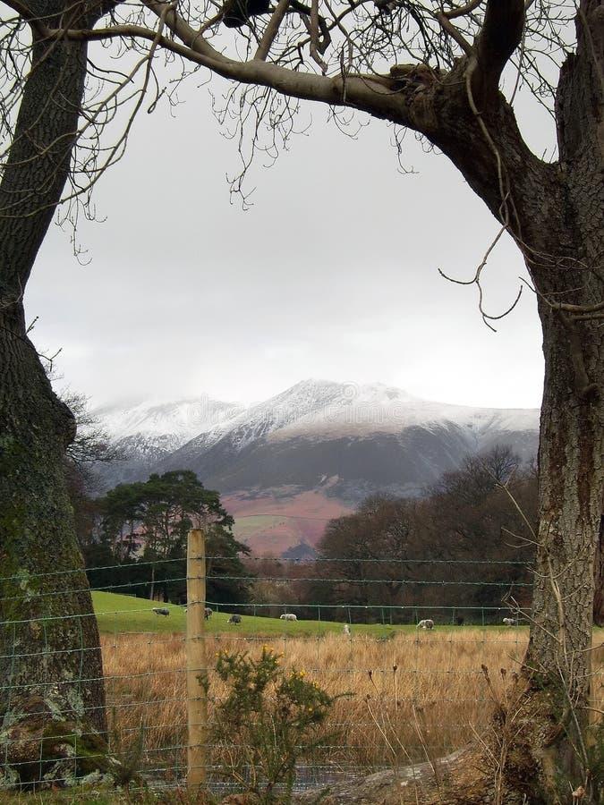 Montagnes encadrées par arbre images stock