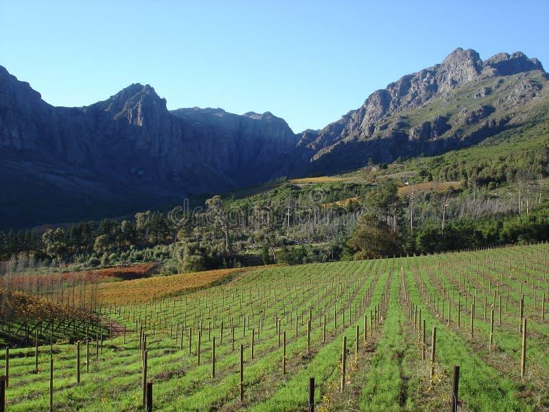 Montagnes ensoleillées dans le cap Winelands images libres de droits