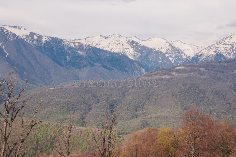Montagnes et forêt à Sotchi images libres de droits