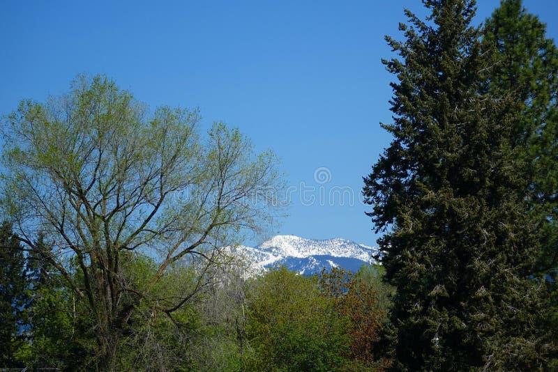 Montagnes et forêts - Missoula, Montana image libre de droits