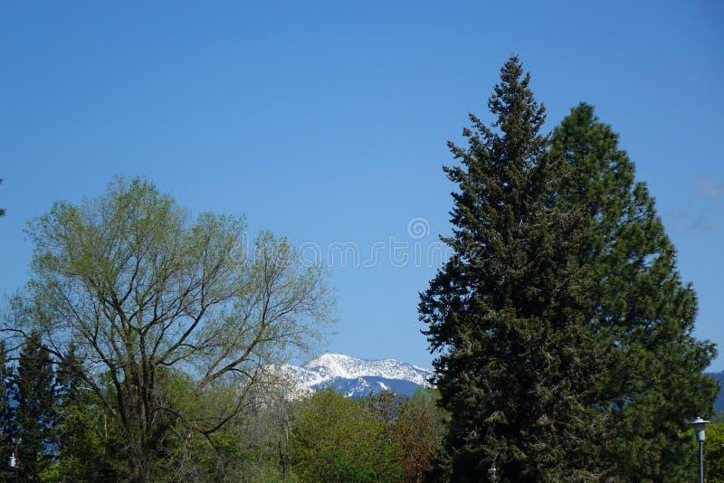 Montagnes et forêts - Missoula, Montana images stock