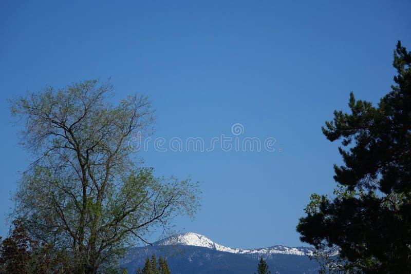Montagnes et forêts - Missoula, Montana photographie stock libre de droits